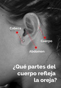 Qué es la Auriculoterapia y cuáles son las diferentes partes del cuerpo que refleja la oreja